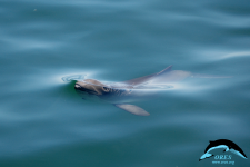 Floating in the Water\'s Skin by Harbour Porpoise